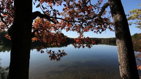 Massachusetts-Walden-Pond-&-oak-trees-c1x