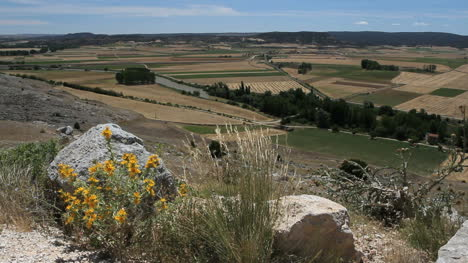 Spain-Castile-Gormaz-Duero-valley-flowers-15