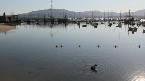 Spain-Galicia-Baiona-harbor-collecting-sea-food