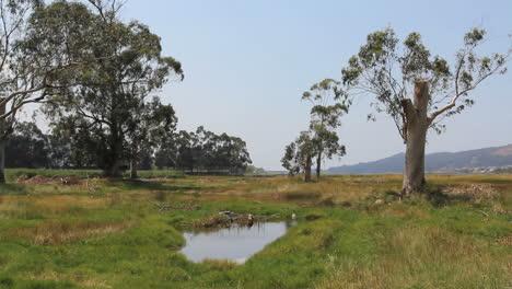 Spain-Ria-edge-marsh