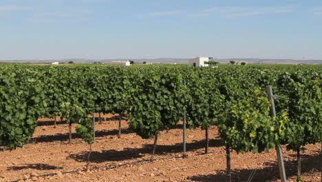 La-Mancha-vineyards