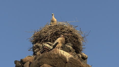 Merida-Aqueduct-stork-nest