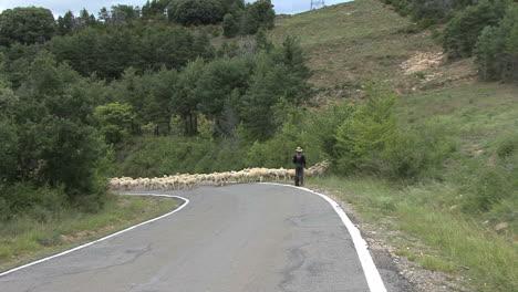 Spain-Pyrenees-sheep-cross-road-zoom-1