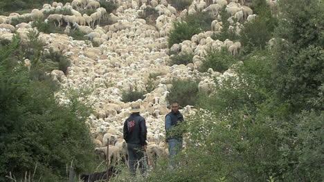 Spain-Pyrenees-sheep-and-shepherds