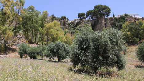 Spain-Andalucia-Ronda-vegetation-and-cliffs