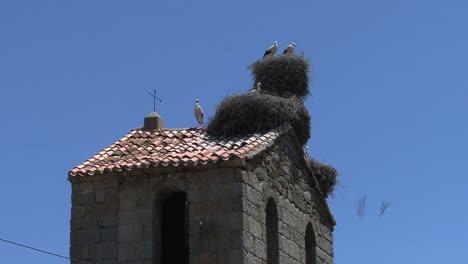 España-Cigüeñas-En-La-Torre-4