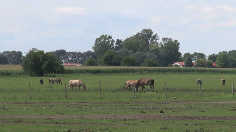 Argentina-estancia-horses-grazing-and-red-tile-ranch