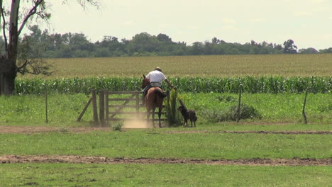 Argentina-Estancia-gaucho-rides-horse-through-gate