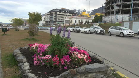 Argentina-Ushuaia-pink-flowers-in-square-garden-by-street
