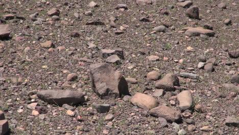 Atacama-desert-floor