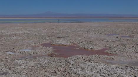 Chile-Atacama-Laguna-Chaxa-Maroon-Puddle-1