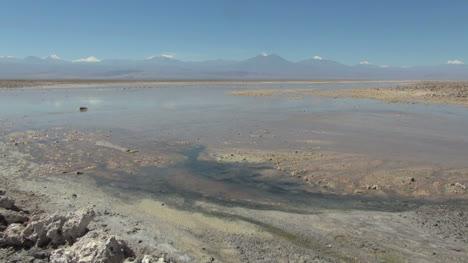 Chile-Atacama-Laguna-Chaxa-mud-paddies-14