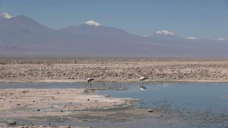 Atacama-Laguna-de-Chaxa-flamingos-s25