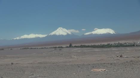 Chile-Atacama-Toconao-line-of-foliage-in-desert-1