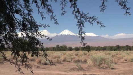 Atacama-The-Andes-range-seem-beyond-a-thorn-tree