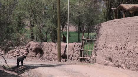 Atacama-San-Pedro-oasis-lamb-in-the-road