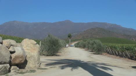 Chile-Casa-Blanca-Valley-vineyards