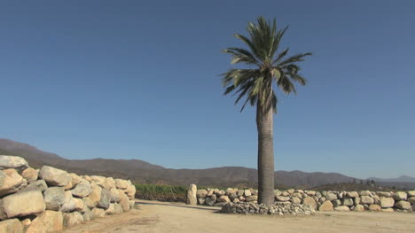 Chile-Casa-Blanca-vineyards-with-palm-tree-s4