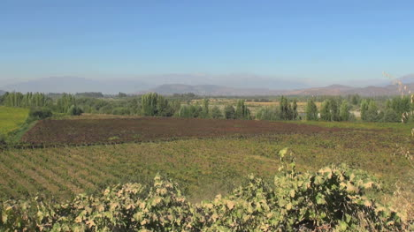 Chile-Colchagua-valley-vineyards-view