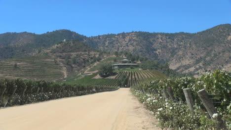 Chile-vineyard-road-editorial