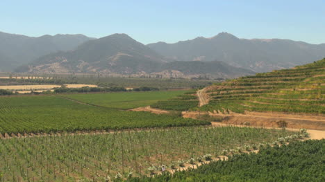 Chile-Santa-Cruz-vineyards-and-Andean-foothills