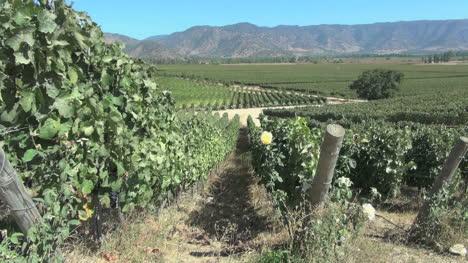 Chile-Santa-Cruz-vineyards-in-the-central-valley