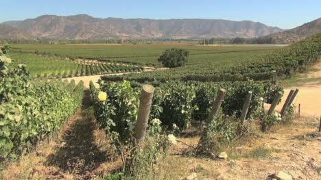 Chile-Santa-Cruz-vineyards