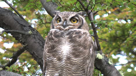Patagonia-owl-zoom-out