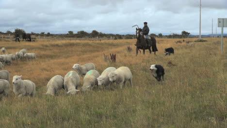 Patagonia-herding-sheep-2-