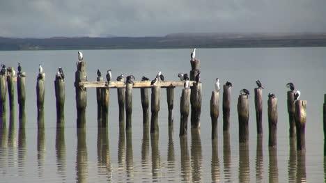 Puerto-Natales-birds-on-posts-s2