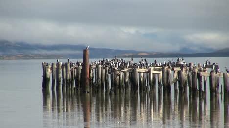 Puerto-Natales-birds-sitting-on-posts-s2