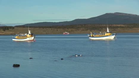 Puerto-Natales-boats-in-sound-s
