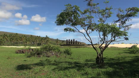 Easter-Island-Anakena-Ahu-Nau-Nau-spindly-tree-5