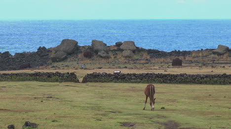 Easter-Island-horse-grazes-in-front-of-rock-wall-2