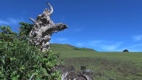 Rapa-Nui-Puna-Pau-dead-tree