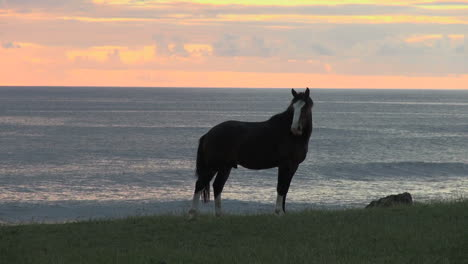 Easter-Island-Tahai-bluff-horse-sunset-8