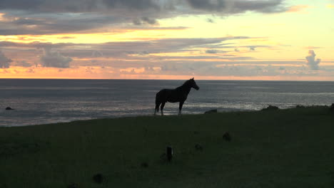 Rapa-Nui-sunset-with-horse-by-the-sea
