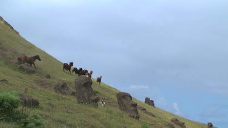 Rapa-Nui-horses-at-Quarry-pb