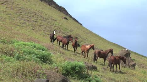 Rapa-Nui-horses-on-a-slope