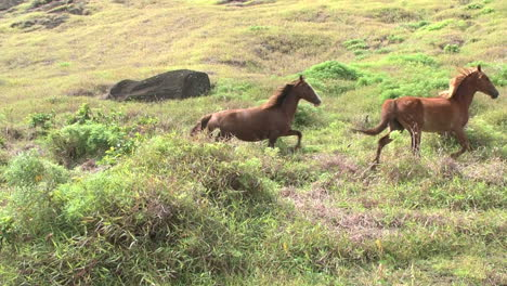 Rapa-Nui-horses-on-a-slope