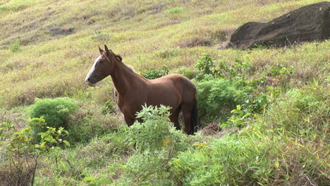 Rapa-Nui-horse-in-the-countryside