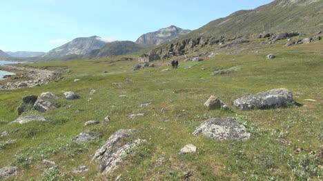 Greenland-Hvalsey-church-ruin-s3