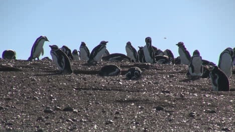 Patagonia-Magdalena-penguins-against-sky-6