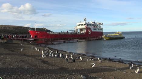 Patagonia-Magdalena-penguins-and-red-ferry