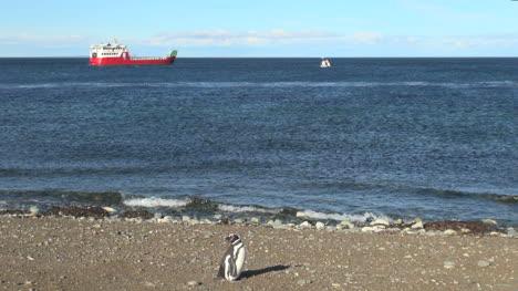 Patagonia-Magdalena-penguin-and-ship-18a