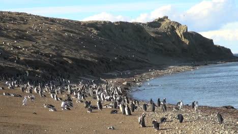 Patagonia-Magdalena-Penguins-view-s