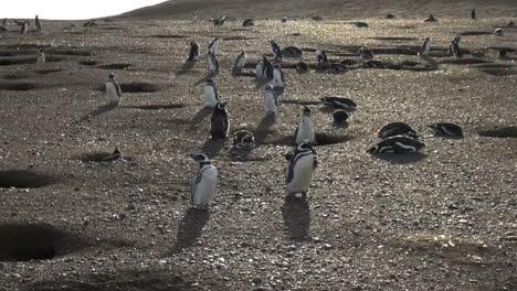 Patagonia-Magdalena-penguins-eerie-landscape-7