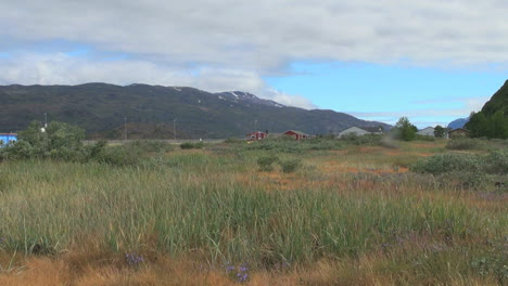 Greenland-Narsarsuaq-vegetation-&-insects-s2