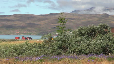 Greenland-Narsarsuaq-vegetation-and-fjord