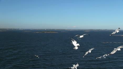 Finland-Helsinki-gulls-dive-following-a-ship